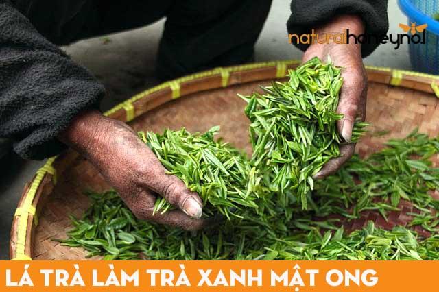 Lá trà làm trà xanh mật ong - các loại trà mật ong