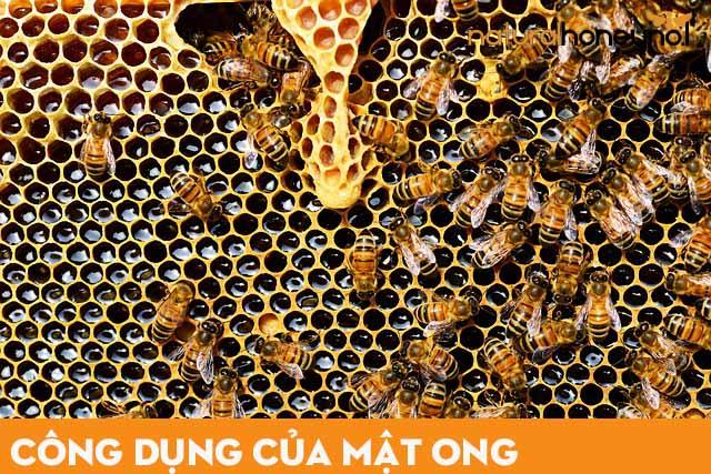 những con ong hút mật tạo ra mật ong nguyên chất
